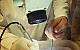 6ième COURS DE DISSECTION ORL 13 au 16 mai 2020
